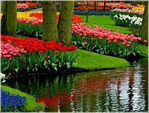 Landscape Flower, Shrub & Tree Planting
